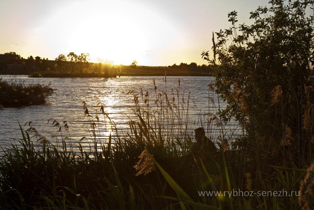 Платная и бесплатная рыбалка на Сенежском озере