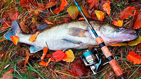 Какую рыбу ловить в октябре