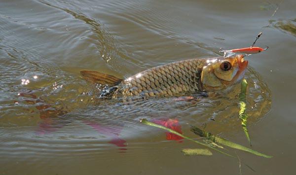 Летняя рыбалка по открытой воде