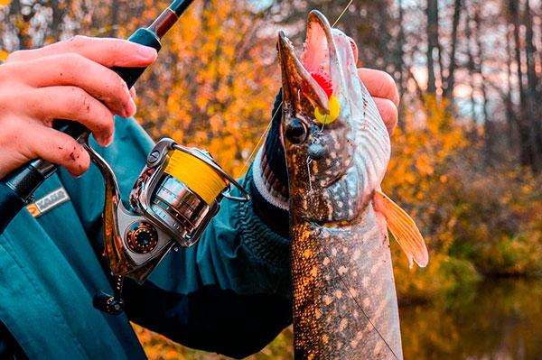 Рыбалка в октябре: как и какую рыбу ловить