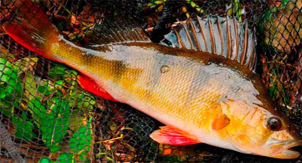 Рыбалка в октябре: кого на что и как ловить
