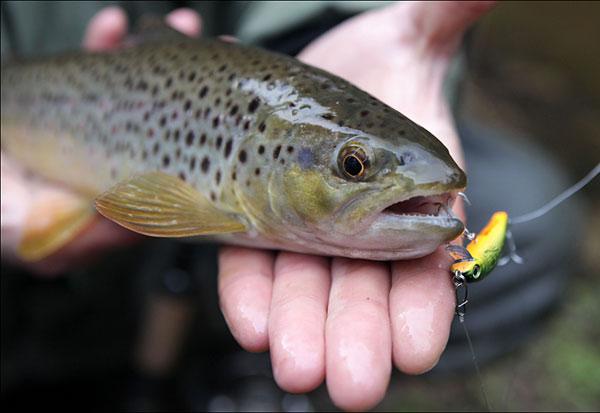 Рыбалка на форель весной