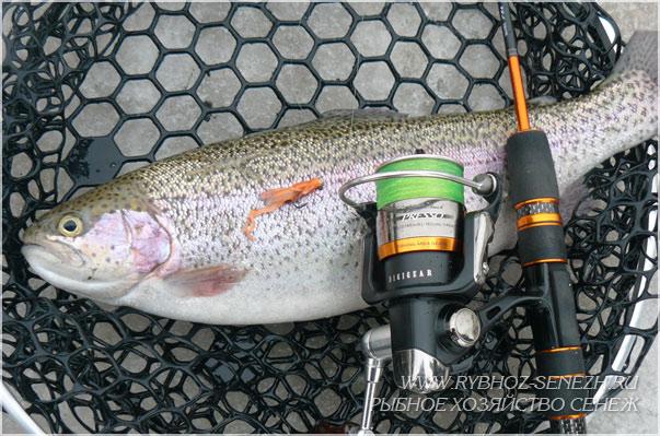 рыбалка в Подмосковье - ловля форели