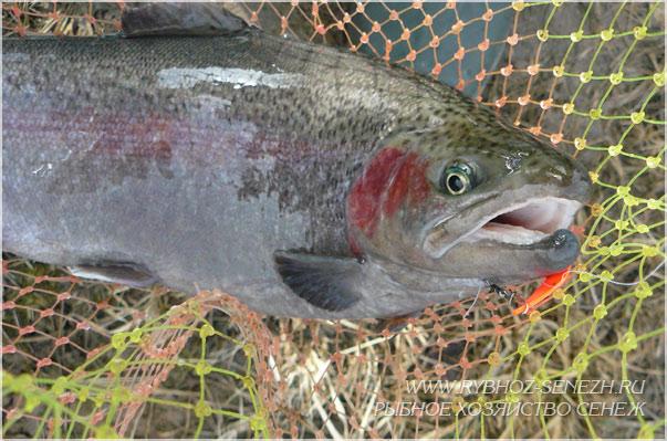 рыбалка на форель
