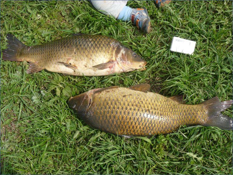 рыбхозы подмосковья рыбалка цены
